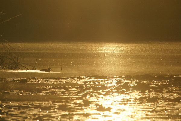 Levé de soleil - paysage photo nature en Sologne ©Alexandre Roubalay - Acadiau d'images