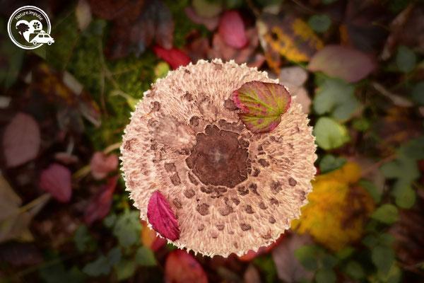 Nature.Impulse - Pilz im Herbst