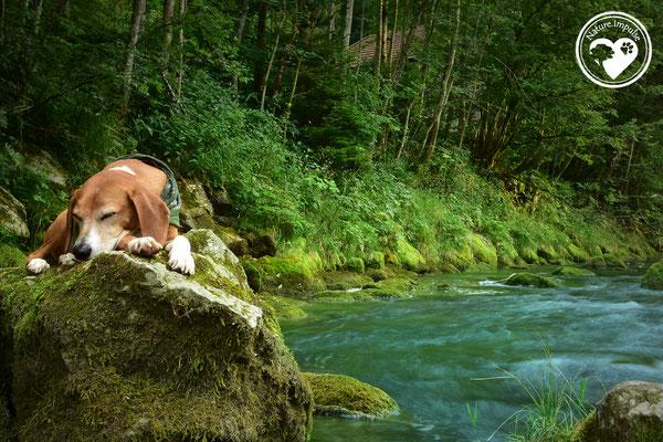 Nature.Impulse - Korny ruht sich aus