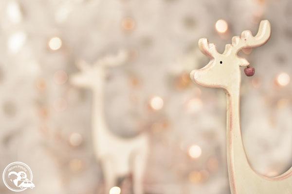 Nature.Impulse - Weihnachtszeit