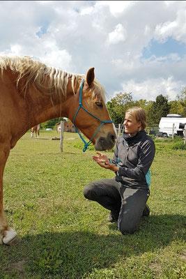 Nature.Impulse - Urlaub gegen Hand auf dem Hof in Sachsen Anhalt - Training mit Solon