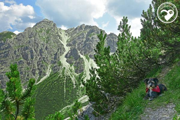 Nature.Impulse - Die Bayerischen Alpen