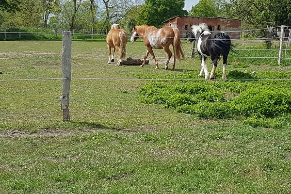 Nature.Impulse - Urlaub gegen Hand auf dem Hof in Sachsen Anhalt - Pferde auf der Koppel