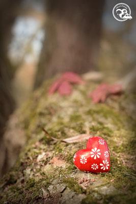 Nature.Impulse - Herz im Wald