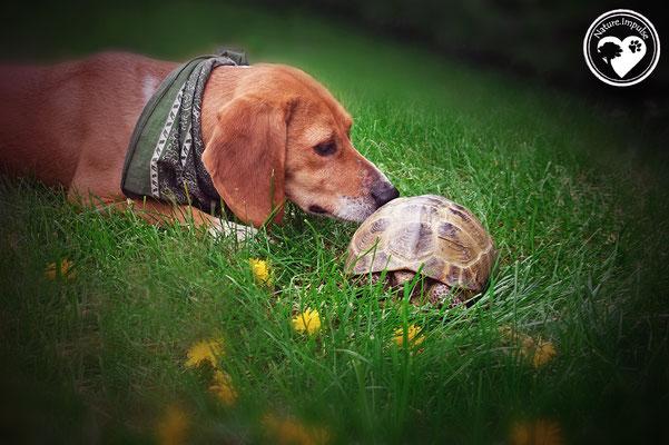 Nature.Impulse - Korny mit Schildkröte