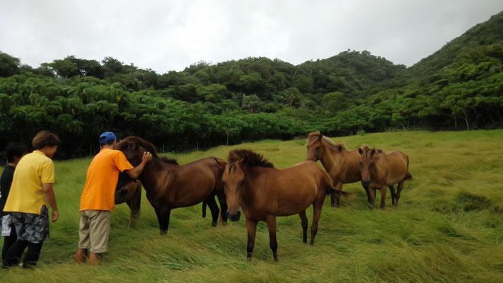 山牧場、男の子たちは風を受けてちょっとかっこいいね。