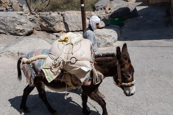 Eseltreiber in Misfat Al Abriyeen