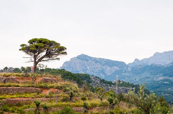 Mallorca, Tramuntana