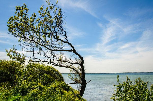 Ostseeküste (Angeln)