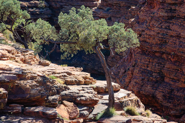 Australien, Kings Canyon