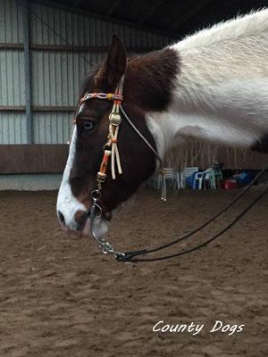 Horses - County Dogs Tau Leinen und Tau Halsbänder.