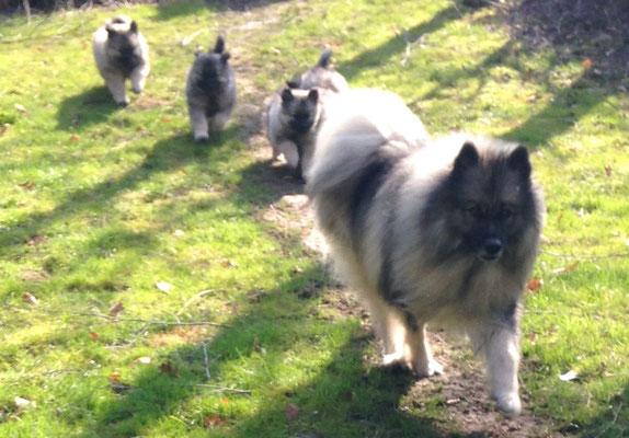 Wolfsspitze von den Römerwölfen