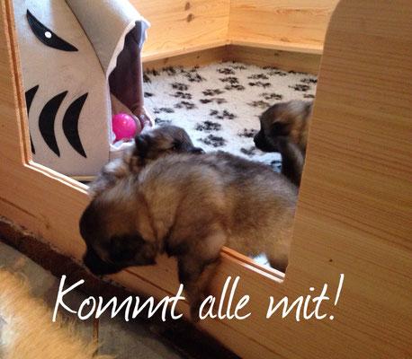 https://www.roemerwoelfe.de/welpen/a-wurf/