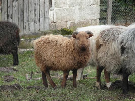 Adamo soll die Herde vermehren - keine Sorge er wird noch grösser :)