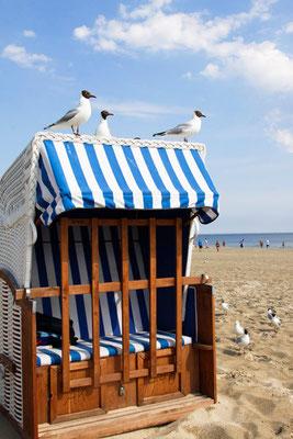 Atztekenmöwen auf einem Strandkorb