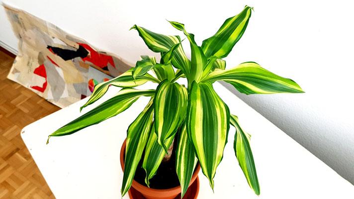 Meine kleine Palme (Foto 1), 2020, Fotografie, 80x142 cm