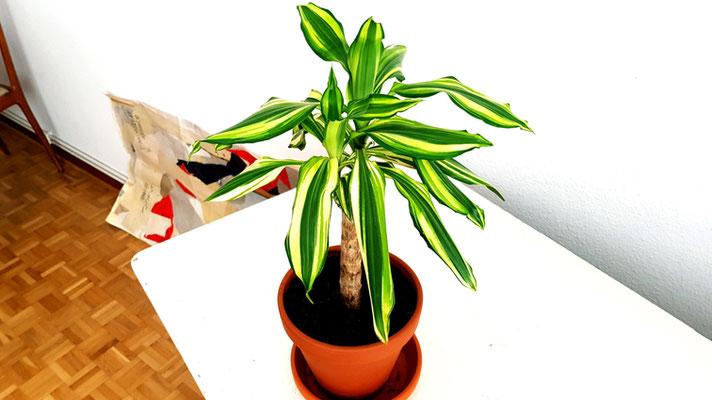 Meine kleine Palme (Foto 6), 2020, Fotografie, 80x142 cm