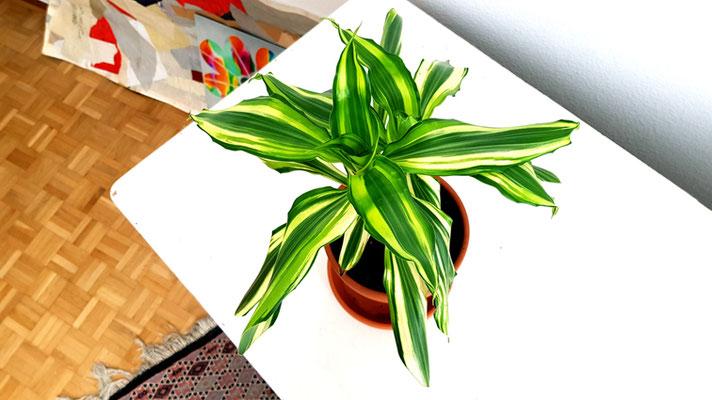 Meine kleine Palme (Foto 2), 2020, Fotografie, 80x142 cm