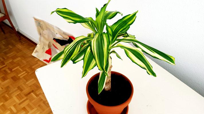 Meine kleine Palme (Foto 5), 2020, Fotografie, 80x142 cm