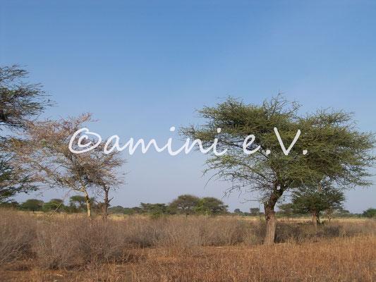 Besichtigung des Baulandes in Nduruma Sommer 2014