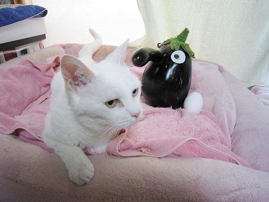 茄子と卵、そして猫2