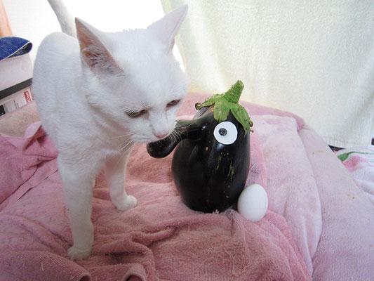 茄子と卵、そして猫1