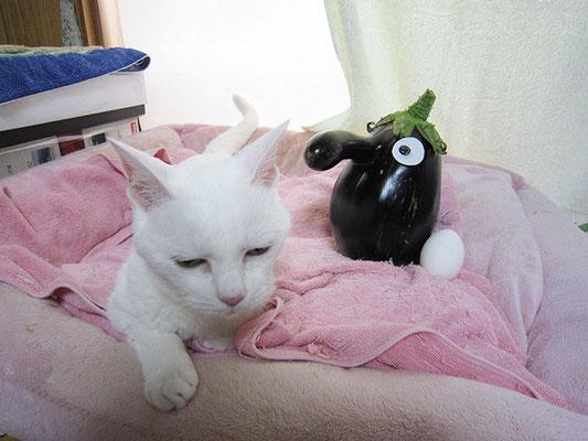 茄子と卵、そして猫3