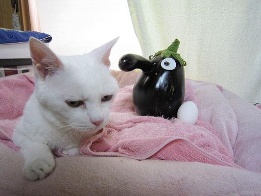茄子と卵、そして猫4