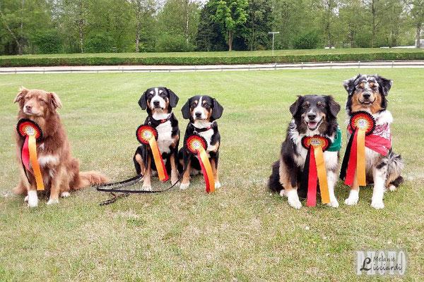 Cara, Anca, Aluna, Panda & Cobie