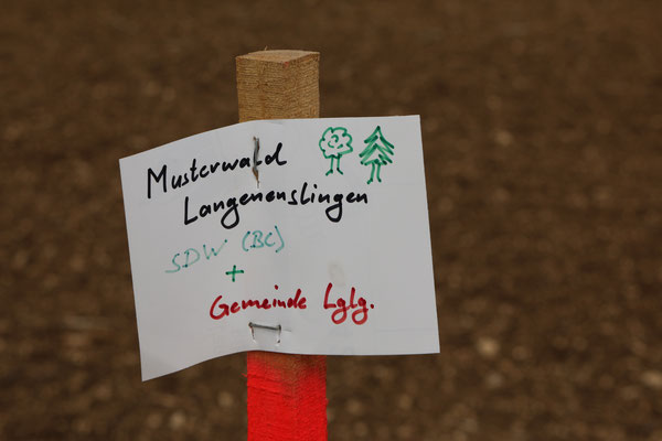 so war es vorgesehen alseine gemeinsame Pflanzaktion  - jetzt pflanzt nur noch die Gemeinde Langenenslingen