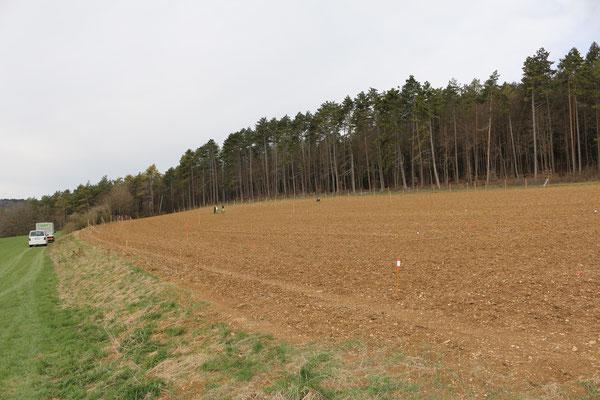 dieses an den Gemeindewald angrenzte Südgrundstück wird komplett mit Wald bepflanz