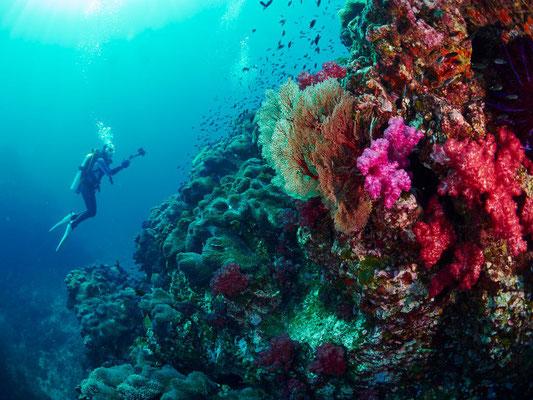 Photo internet donnant un aperçu des coraux et tombants autour des îlets