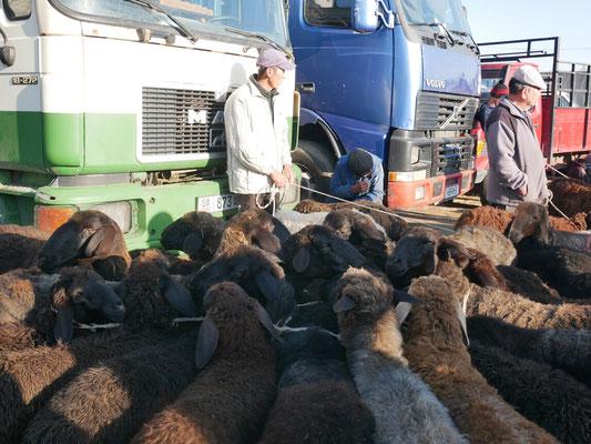 Marché aux bestiaux, Karakol city