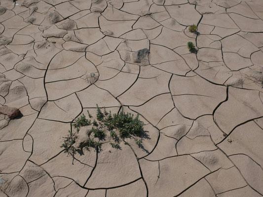 C'est la sécheresse