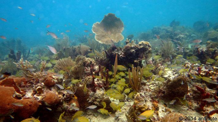 Photo internet donnant un aperçu des coraux du coin
