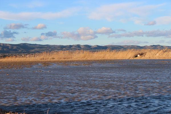 Reisfeld im Winter / Ebrodelta