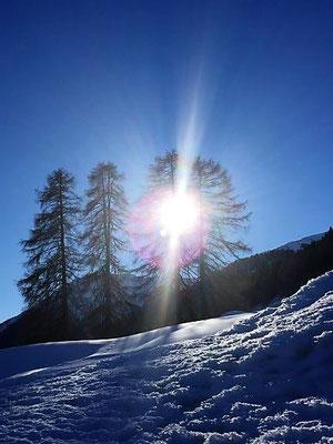 Schneebäume, Davos, Foto L. Moulin-Gallego