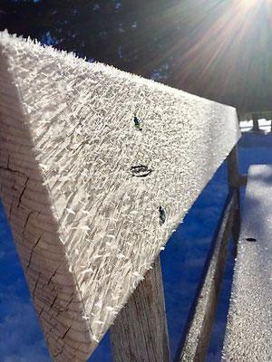 Kristallzauber, Davos, Foto L. Moulin-Gallego