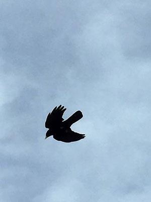 Freiheit hoch oben, Engelberg/Foto L. Moulin-Gallego
