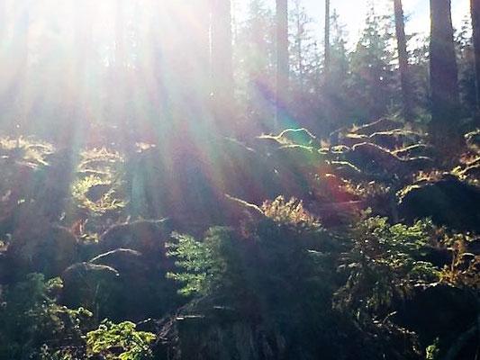Geheimnisvoller Wald, Sölden/Foto Lucia Moulin-Gallego