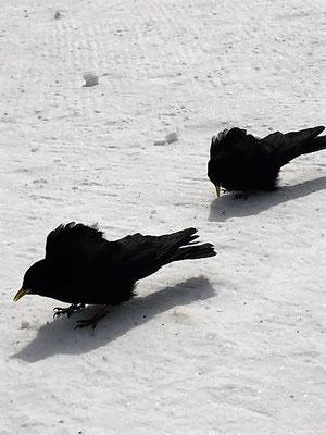 Zwei trotzen Wind und Kälte, Davos, Foto L. Moulin-Gallego