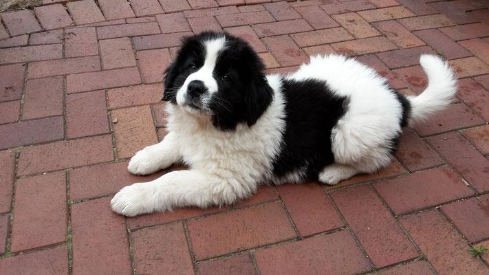 9 Wochen alt