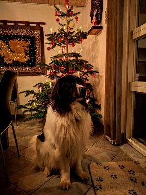 Ambra Weihnachten