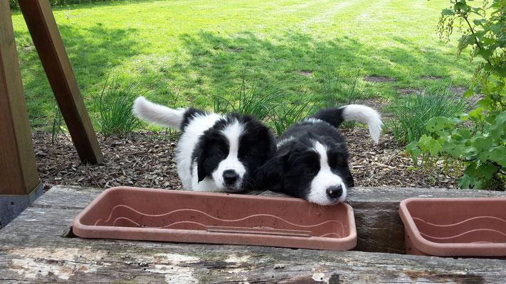 Bryce und Bragi