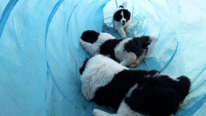 sie lieben ihren Tunnel