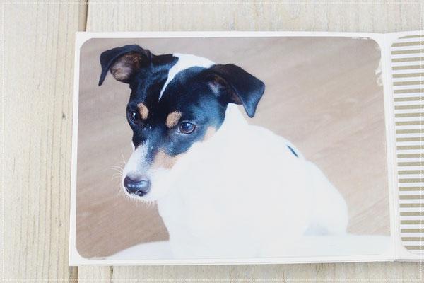 Minialbum, Album mit Hund, Geschenk, Fotoalbum, schwarz-weiß-craft, Mini