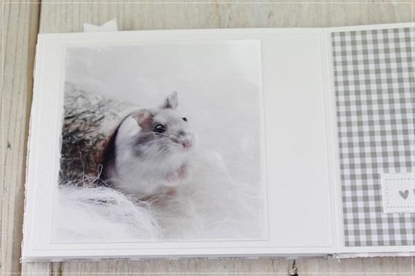 Hamster, Fotografie