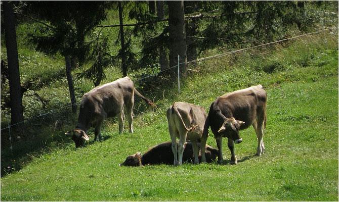 Fuchswald Alpe
