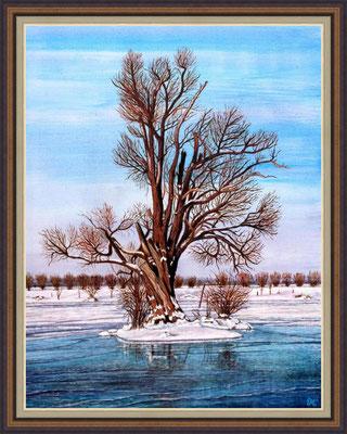 Titel: alte Weide - Acryl - Leinwand 60 x 75 cm