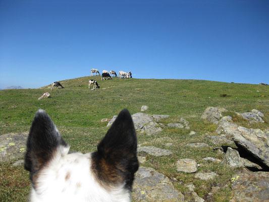 Gipfel mit Schafen